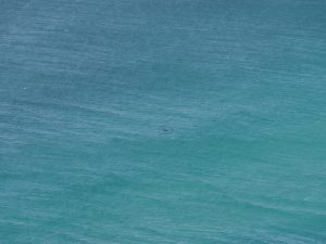 Can you see the dolphins?