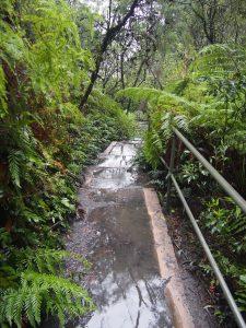 Walk to Leura Falls