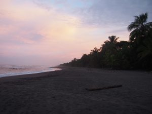 "After sunset we had to leave the beach, it is closed to leave the turtles ""alone"" (or with the guided tours)"